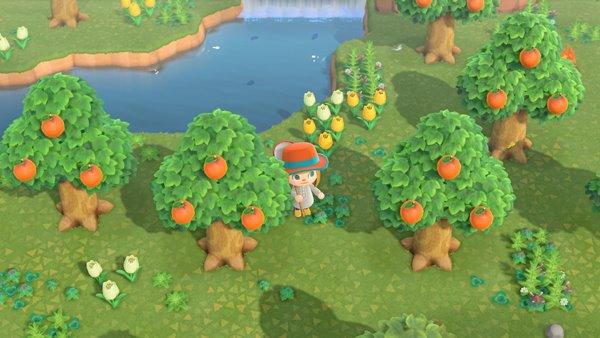 オレンジがとれる島あつ森